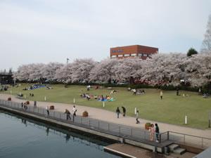 富山市でのお花見
