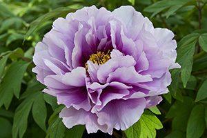 #23 花の秘密の言葉  The Secret Language of Flowers